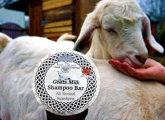 Soap Folk Goats milk solid shampoo bar, gentle unscented scalp care soap